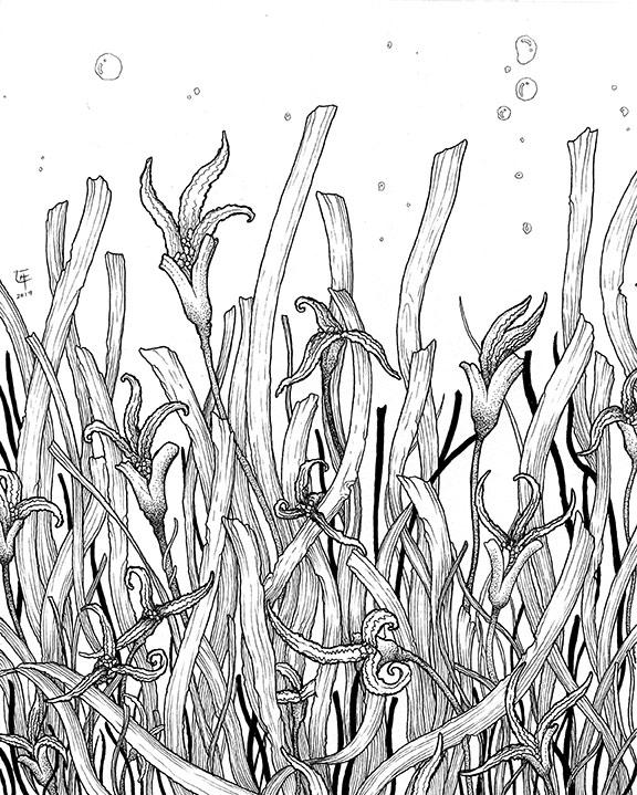 seagrass protection Philippines Negros Oriental Dumaguete city artist Cil Flores Angelo Delos Santos Educational project exhibition exhibit artwork Cil Flores